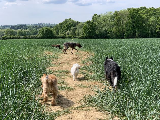 ScenterBarks pride ourselves on our excellence with our award winning dog walking service and and our professional team always available to help out.