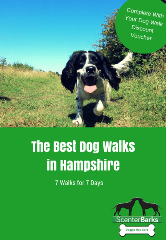 Dog Walks Hampshire